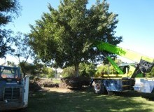 Kwikfynd Tree Management Services wheatlands